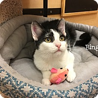 Adopt A Pet :: Bingo - Foothill Ranch, CA