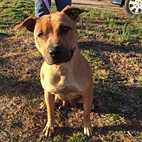 Adopt A Pet :: Annalyce - Denton, MD