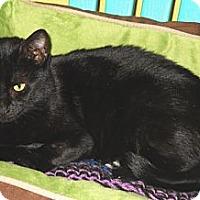 Adopt A Pet :: Plumpkin - Mobile, AL