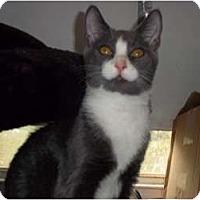 Adopt A Pet :: lightning - feasterville, PA
