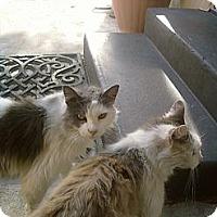 Adopt A Pet :: No Name - Modesto, CA