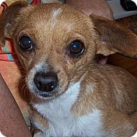 Adopt A Pet :: Sammie - Tucson, AZ