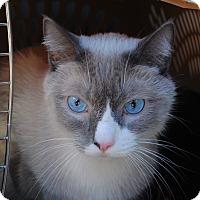 Adopt A Pet :: Tristin - Palmdale, CA
