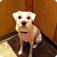 Adopt A Pet :: Barkley - Las Vegas, NV