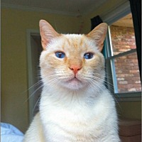 Adopt A Pet :: Jackson - Atlanta, GA