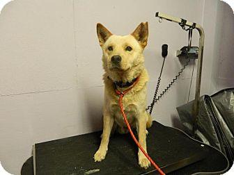 Chow Chow Mix Dog for adoption in Waverly, Ohio - Motzie