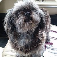 Adopt A Pet :: Sheila - Gainesville, FL