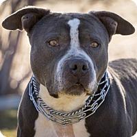 Adopt A Pet :: Deeter - Gardnerville, NV