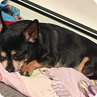 Adopt A Pet :: JellyRoll - Mahopac, NY