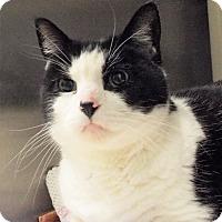 Adopt A Pet :: Sake - Grants Pass, OR