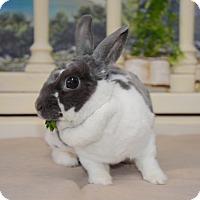 Adopt A Pet :: Crepe - Chicago, IL