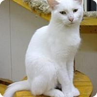 Adopt A Pet :: Veronica - Stuart, VA