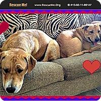 Adopt A Pet :: Cubby N Lilly - Scottsdale, AZ