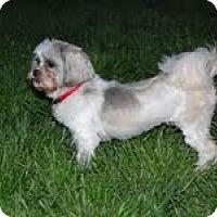 Adopt A Pet :: Baby Girl Annie - Shawnee Mission, KS