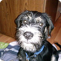 Adopt A Pet :: Sebastian - Youngstown, OH