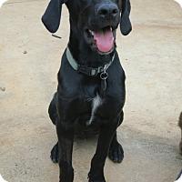 Adopt A Pet :: Lincoln - Homewood, AL