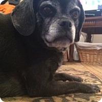 Adopt A Pet :: Abbie - Strasburg, CO