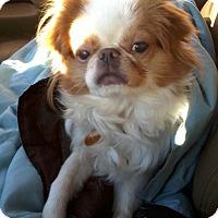 Adopt A Pet :: Yuki - Aurora, CO