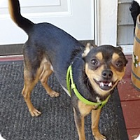 Adopt A Pet :: Pooka - Framingham, MA