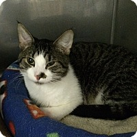 Adopt A Pet :: Tad - Byron Center, MI