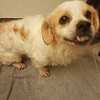 Adopt A Pet :: Norman - Sheridan, OR