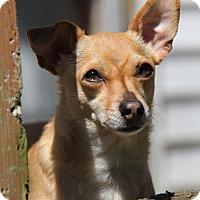 Adopt A Pet :: Buddy - Portland, OR