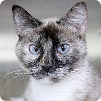 Adopt A Pet :: Marla - Jefferson, WI