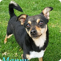 Adopt A Pet :: Manny - El Cajon, CA