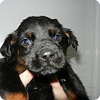 Adopt A Pet :: Winnie - South Jersey, NJ