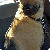 Adopt A Pet :: Cisco - Phoenix, AZ