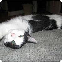 Adopt A Pet :: Dickie Dee - bloomfield, NJ