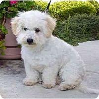 Adopt A Pet :: Chipper - La Costa, CA