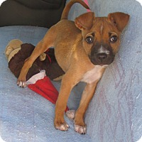 Adopt A Pet :: Wiggles - Jacksonville, FL