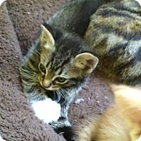 Adopt A Pet :: Otter - Monroe, GA