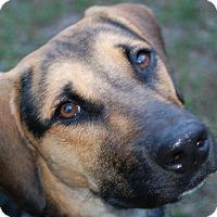 Adopt A Pet :: Ernie - Ormond Beach, FL