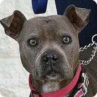Adopt A Pet :: Linda - Palmdale, CA