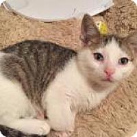 Adopt A Pet :: Bingo - East Hanover, NJ