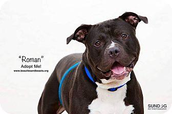 Pit Bull Terrier Mix Dog for adoption in Wichita, Kansas - Roman