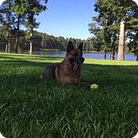 Adopt A Pet :: Razor - Morrisville, NC