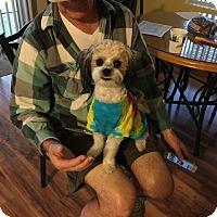 Adopt A Pet :: Rico - Denver, CO
