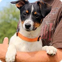 Adopt A Pet :: Black Jack ~ meet me! - Glastonbury, CT