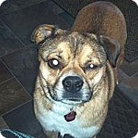 Adopt A Pet :: Spencer - Morgantown, WV