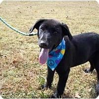Adopt A Pet :: Weldon - Adamsville, TN