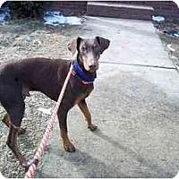 Adopt A Pet :: JD - Adamsville, TN