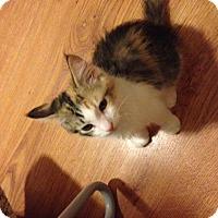 Adopt A Pet :: Cali - Irvine, CA