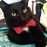 Adopt A Pet :: Quentin - St. Louis, MO