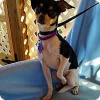 Adopt A Pet :: Tacoma - New Stanton, PA