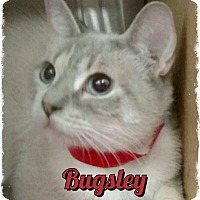 Adopt A Pet :: Bugsley - Pueblo West, CO