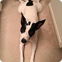 Adopt A Pet :: Sarah - Houston, TX