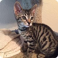 Adopt A Pet :: Laszlo - Valley Center, CA